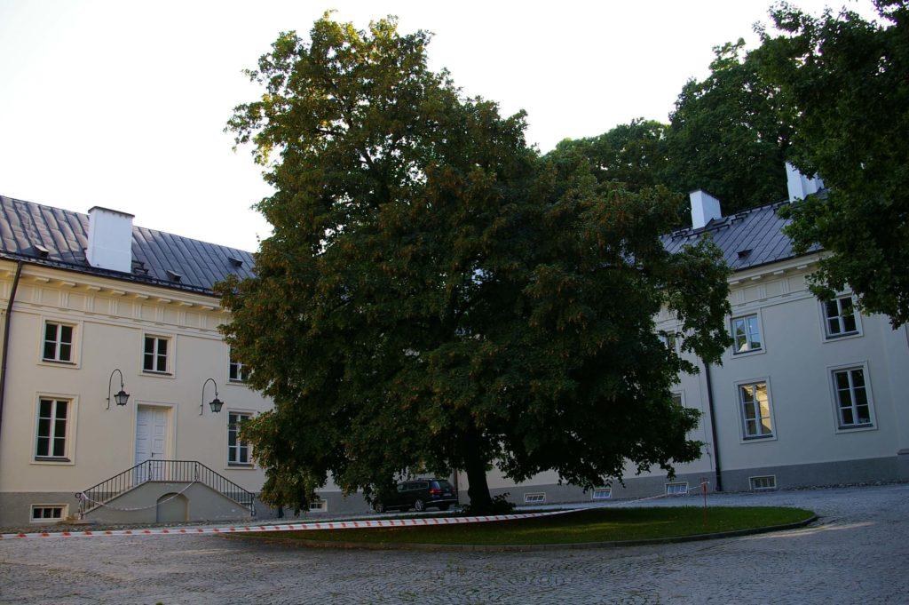 Pod lipą na północnym dziedzińcu Starej Pomarańczarni odbywały się kiedyś koncerty